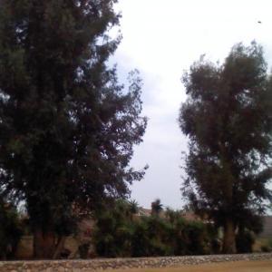 eucalyptus1-172193351_sq_thumb_m