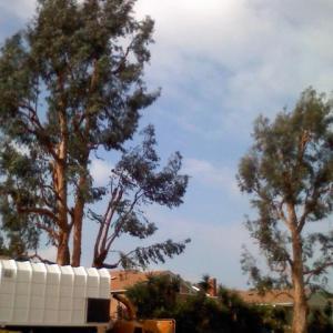 eucalyptus2-172193423_sq_thumb_m